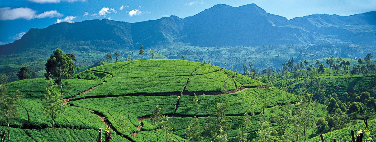 Tour Sri Lanka: Customised Tours